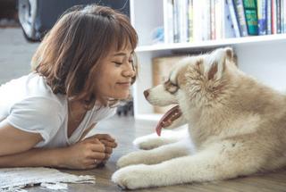 Cómo ganar dinero por cuidar perros